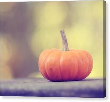 Little Pumpkin Canvas Print by Amy Tyler