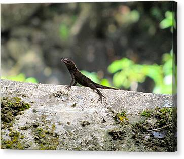 Lizard Canvas Print by Tamika Carroll