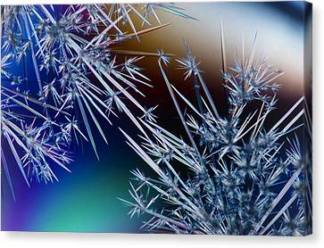 Lm Of Crystals Of Antibiotic Streptomycin Canvas Print by David Parker