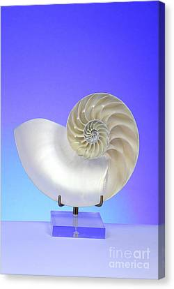 Logarithmic Spiral Canvas Print by Photo Researchers, Inc.