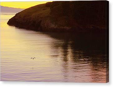 Lone Bird At Rosario Beach Point Canvas Print by Randall Thomas Stone