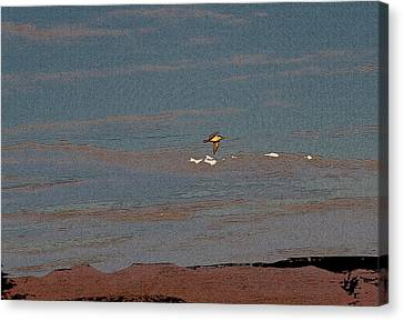 Lone Gull  Canvas Print by Gilbert Artiaga