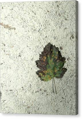 Lone Leaf Canvas Print by Todd Sherlock