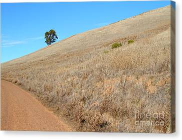Lone Tree At End Of The Trail At Coyote Hills California . 7d10920 Canvas Print by Wingsdomain Art and Photography