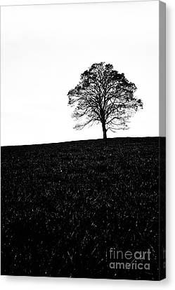 Lone Tree Black And White Silhouette Canvas Print by John Farnan
