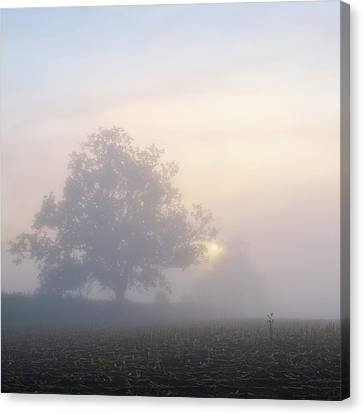 Lone Tree Canvas Print by Paul Simon Wheeler Photography
