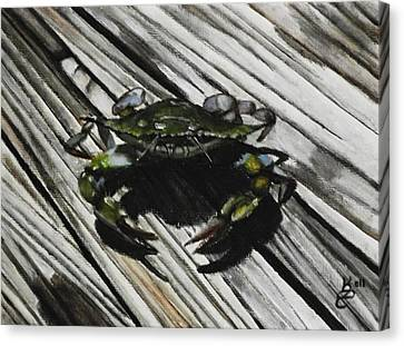 Lonely Crab Canvas Print by Kim Selig