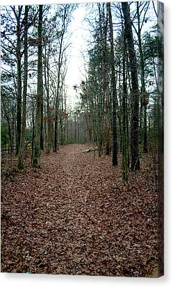 Lonely Path Canvas Print by Terry Thomas