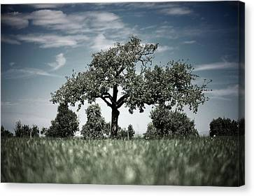 Lonely Tree Canvas Print by Markus Wäger