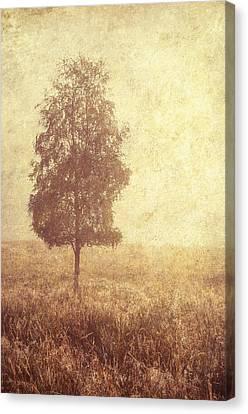 Lonely Tree. Trossachs National Park. Scotland Canvas Print by Jenny Rainbow