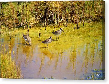 Long Billed Dowitchers Migrating Canvas Print by Roena King
