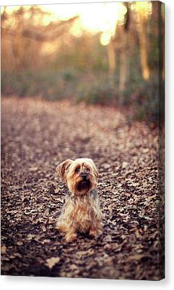 Long Hair Puppy Canvas Print by Someone bought my images.