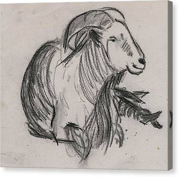 Long Horn Mountain Goat Canvas Print by Ethel Vrana