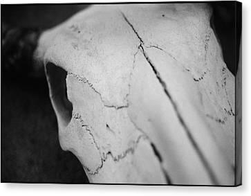 Longhorn Skull Canvas Print by Julie VanDore