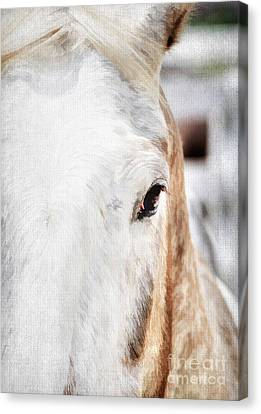Looking Into Her Soul Canvas Print by Darren Fisher