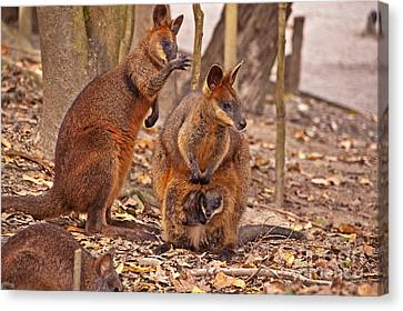 Looking Out From The Safety Of The Pouch Canvas Print by Bob and Nancy Kendrick