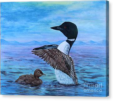 Loon Mother And Baby Canvas Print by Judy Filarecki