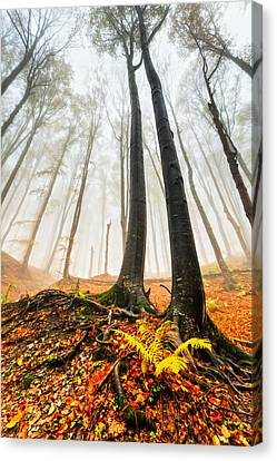 Lords Of The Forest Canvas Print by Evgeni Dinev