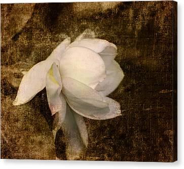 Love Letter Viii Cape Jasmine Gardenia Canvas Print by Jai Johnson
