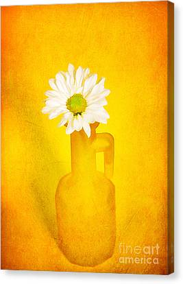 Love Me Love Me Not Canvas Print by Darren Fisher