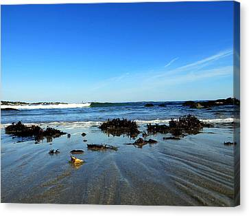 Low Tide On Long Beach Canvas Print by Pamela Turner