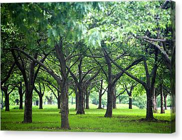 Low Trees In Flushing Meadows-corona Park Canvas Print by Ryan McVay