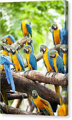 Macaw Canvas Print by Anek Suwannaphoom