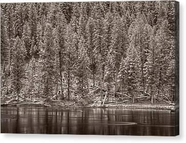 Madison River Yellowstone Bw Canvas Print by Steve Gadomski