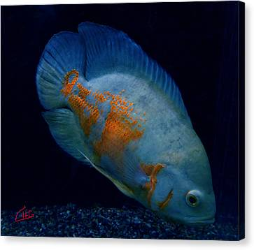 Magic Fish Name Oscar  Canvas Print by Colette V Hera  Guggenheim