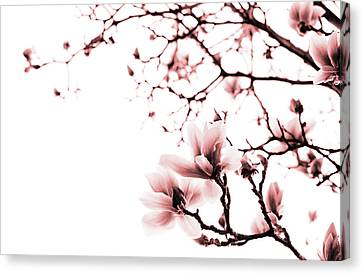 Magnolia - Monochrome Canvas Print by Laura Melis