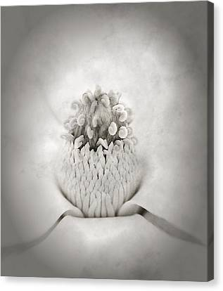 Magnolia 1 Canvas Print by Rich Franco