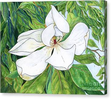 Magnolia Canvas Print by Linda Battles