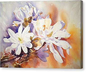 Magnolia Stellata Canvas Print by Ruth Harris