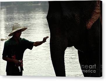 Mahut With Elephant Canvas Print by Bob Christopher