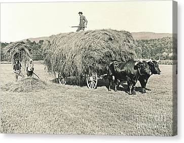 Making Hay While The Sun Shines 1903 Canvas Print by Padre Art