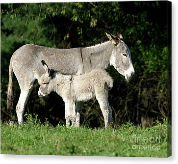 Mama Donkey And Baby Canvas Print by Deborah  Smith