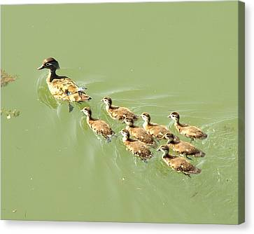 Mama Duck And Ducklings Canvas Print by James Granberry