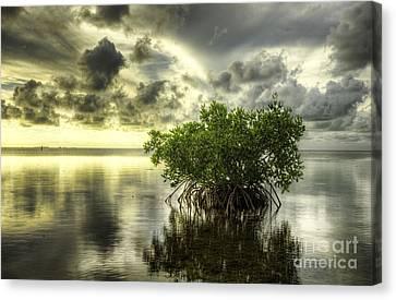 Mangroves I Canvas Print by Bruce Bain