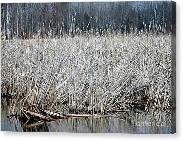 Marsh Land Canvas Print by Kathleen Struckle