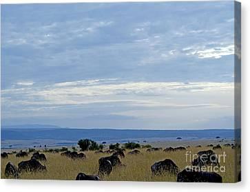 Masai Mara Canvas Print by Pravine Chester