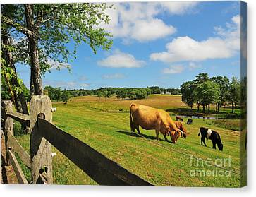 Massachusetts Farm Canvas Print by Catherine Reusch  Daley