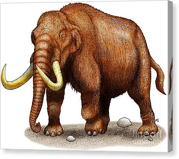 Mastodon Canvas Print by Roger Hall and Photo Researchers