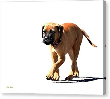 Me And My Shadow 5 Canvas Print by Dale   Ford