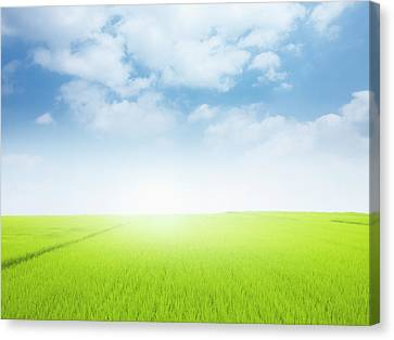 Meadow. Canvas Print by Ultra.f