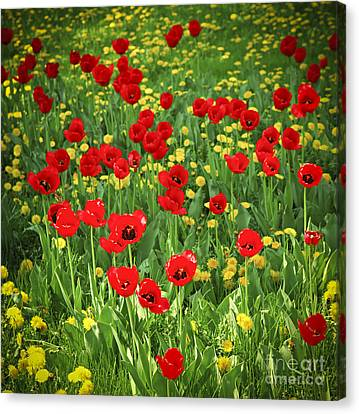 Meadow With Tulips Canvas Print by Elena Elisseeva
