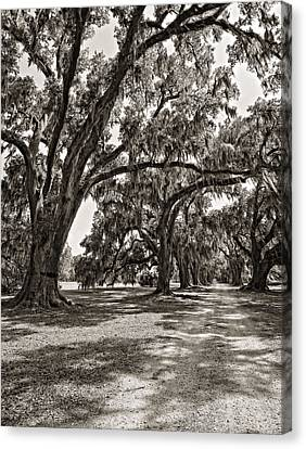Memory Lane Monochrome Canvas Print by Steve Harrington