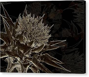 Milk Thistle In Sepia Canvas Print by Shirley Sirois