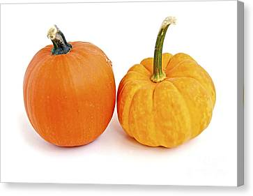 Mini Pumpkins Canvas Print by Elena Elisseeva