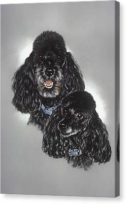 Miniature Poodles Canvas Print by Patricia Ivy