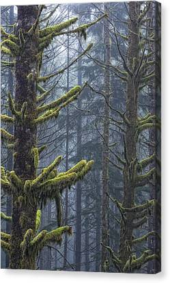 Misty Mystical Moss Forest Canvas Print by Paul W Sharpe Aka Wizard of Wonders